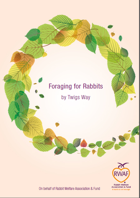 Foraging for rabbits