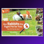Are rabbits for you book