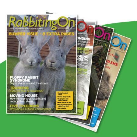 Rabbiting On Glossy Magazine